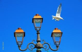Le lampadaire et la mouette 2508 VS